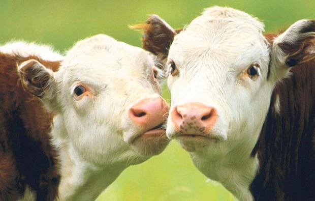Hadlow College's free school bid with a 'rural ethos'