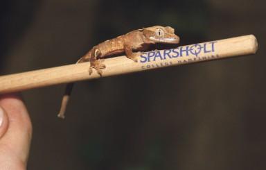 Sparsholt
