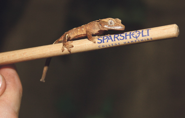 There's Gecko-mania at Sparsholt College
