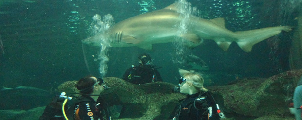 Harriet's shark dive leads to work placement at aquarium