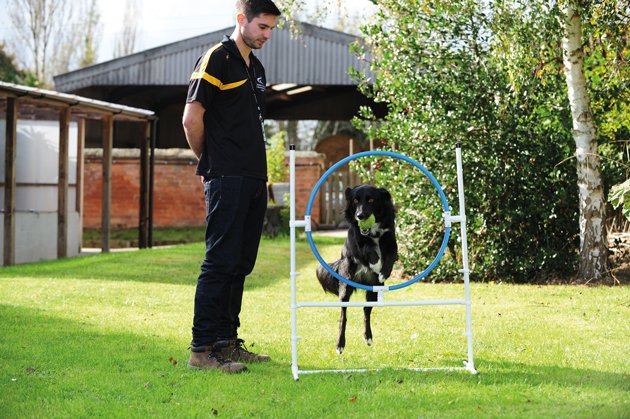 Jonathan goes from elephant study to Derby dogs course