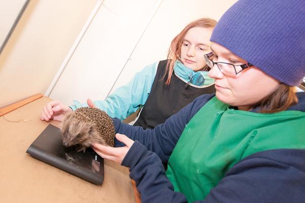 Guest for 'hedgehog haven'