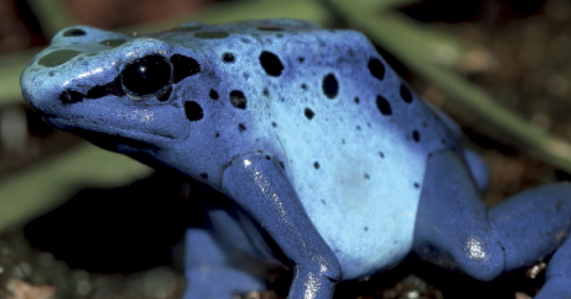 FEATURE: College lecturer breeds deadly frogs