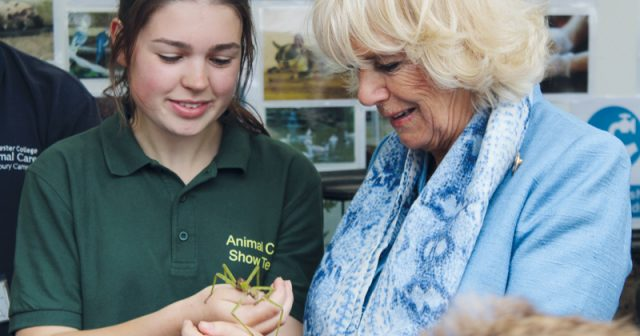 Stick insect has a royal encounter at agricultural show