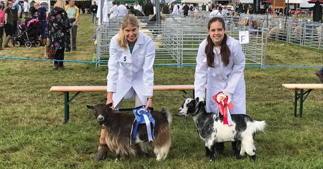 Quartet of college goats win five rosettes at Frome Agricultural & Cheese Show