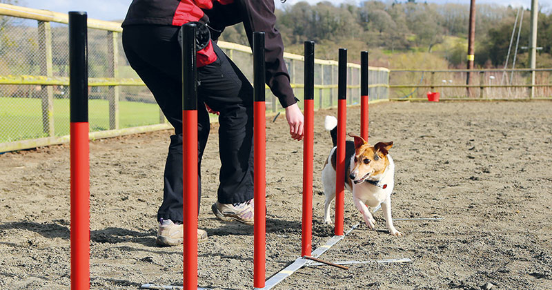 Hundreds of dogs descend on Hartpury College for competitive dog agility event
