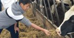 International students meet cows for the first time at college farm