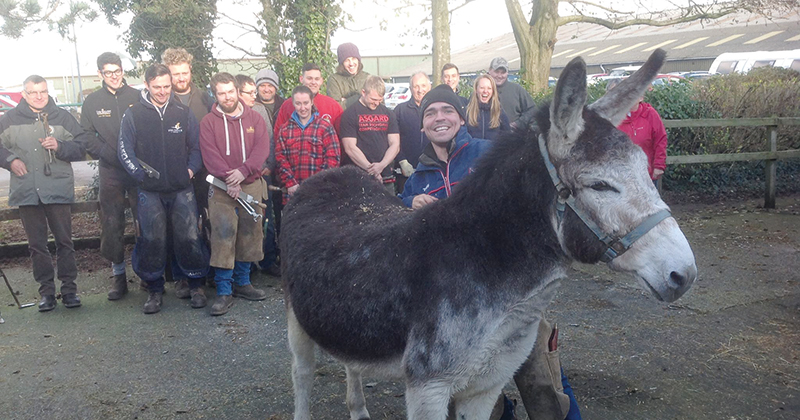 Farriery apprentices learn the art of caring for donkey feet