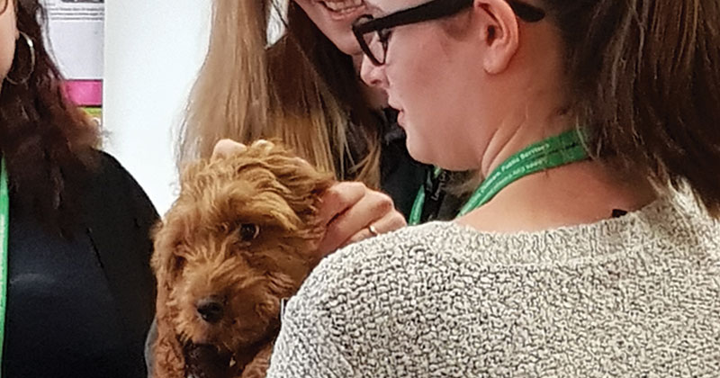 Puppy named Jeffrey joins college as a therapy dog