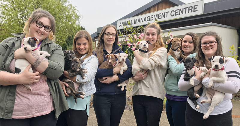 Nine puppies rescued by lecturer and raised by her students
